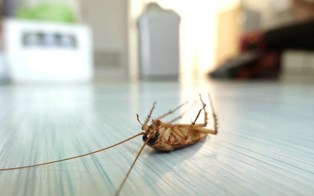 ¿Cómo prevenir las plagas en el sector de la hostelería?